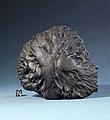 Middlesbrough meteorite - 20080625.jpg