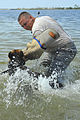 Military Working Dog Trains in Water DVIDS299401.jpg