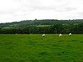 Milkhurst Wood - geograph.org.uk - 505423.jpg