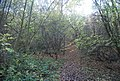 Moat Wood - geograph.org.uk - 1568609.jpg