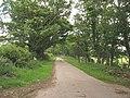 Modern road linking Plas Porthamel to the Llanedwen road - geograph.org.uk - 912672.jpg