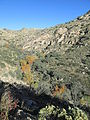 Molino Canyon Santa Catalina Mountains Arizona 2014.JPG