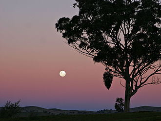 Chronology of Jesus - The rising full moon at sunset signals the start of the Passover meal. This is two weeks after the new moon has heralded the start of the month of Nisan (March/April).