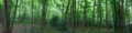 Morris's Wood Panorama, Greylands, Horsham.png