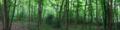 Morris's Wood Panorama, Greylands, Horsham.png