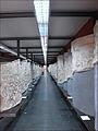 Moulages de la Colonne Trajane (EUR, Rome) (5911816662).jpg