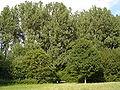 MuensterWienburgparkWaldrand.jpg