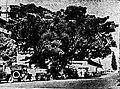 Murraystfig1937.jpg