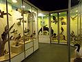 Museo Fin del Mundo 19.JPG
