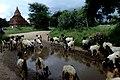 Myin Ka Bar, Myanmar (Burma) - panoramio.jpg