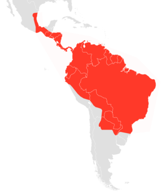 Black myotis - Image: Myotis nigricans map