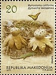 Myriostoma coliforme. Stamp of Macedonia.jpg