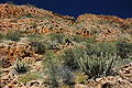 Namibie Namib Naukluft Park 07.JPG