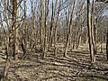 Nationaal Park Kennemerland (26498882867).jpg