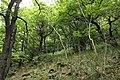 National nature reserve Milešovka in summer 2014 (8).JPG