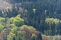 Naturpark Thüringer Wald.Blick vom Reinhardsberg.12.ajb.jpg