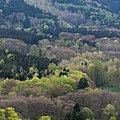 Naturpark Thüringer Wald.Blick vom Reinhardsberg.13.ajb.jpg