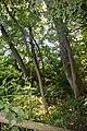 Naturschutzgebiet Haseder Busch - Im Haseder Busch (13).jpg