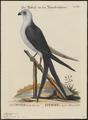 Nauclerus furcatus - 1700-1880 - Print - Iconographia Zoologica - Special Collections University of Amsterdam - UBA01 IZ18200348.tif