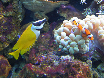English: Fish in aquarium.