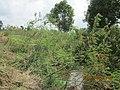 Ngã 3 Sông Thoa-Sông Vệ (Hành Thịnh-Nghĩa Hành-Quảng Ngãi) - panoramio.jpg