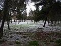Nieve en el bosque - panoramio.jpg