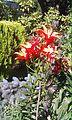 Nieznany kwiatek 10.jpg