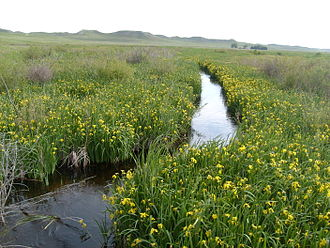 Niobrara River - Niobrara river flowing through Agate Fossil Beds National Monument, near its headwaters.