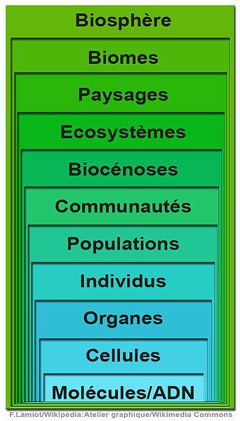Fichier:NiveauOrganisationIntégrationBiodiversité.jpg