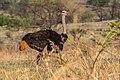 Nkomazi Game Reserve, South Africa (22030084874).jpg