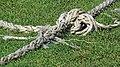 North London Cricket Club boundary rope Crouch End London England 2.jpg