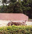 Nosorozec, ZOO Wroclaw, 18.6.1994r.jpg