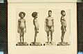 Nova Guinea - Vol 3 - Plate 31.jpg