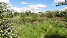 Oak Avenue Local Nature Reserve 9.JPG