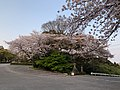 Oita Ken Gokoku Shrine 20200408 02.jpg