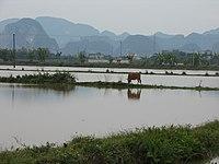 Okolice Ninh Binh.jpg