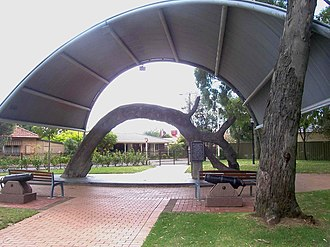 The Old Gum Tree - The Old Gum Tree