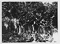 Old wall at palace, Agana, Guam, 7 October 1929.jpg