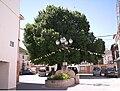 Olma del Concejo de Torralba, Cuenca.jpg
