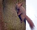 On a tree (46618504265).jpg