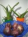 Onions and aloe vera.jpg