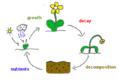 Organic Matter cycle drawing.png