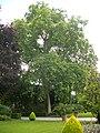 Orléans - jardin des plantes (06).jpg