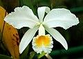 Orquídeas (4190742940).jpg