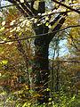 Ostromecko park 29 10-2013.jpg