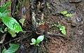 Overbridge rain forest (2720232198).jpg
