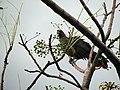 Pássaro em Viamão 005.JPG