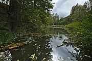 Přírodní památka Pilský rybníček (02).jpg
