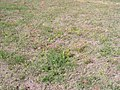 P9210012 Tienie Versfeld Wildflower Reserve.JPG