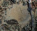 PNBT dołek mrówkolwa 03.07.10 p.jpg